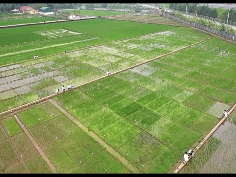 CPTPP: Cơ hội thách thức cho nông sản Việt Nam
