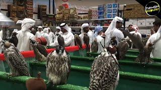 Video Hanya Di DUBAI!! 10 Hewan Peliharaan Yg Paling Aneh Di Dubai MP3, 3GP, MP4, WEBM, AVI, FLV April 2019