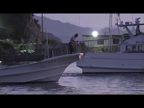 Japan: Die Jagd beginnt - 1.700 Delfine zu Fang oder A ...