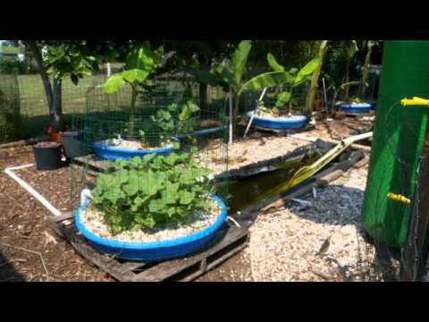 Help spread the permaculture word permaculture magazine for Garden pool aquaponics