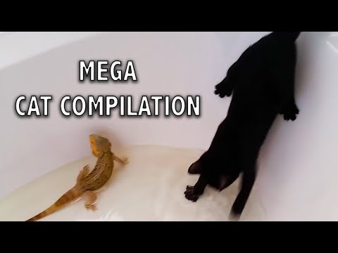 Video Ozzy Man Reviews: MEGA CAT COMPILATION download in MP3, 3GP, MP4, WEBM, AVI, FLV January 2017