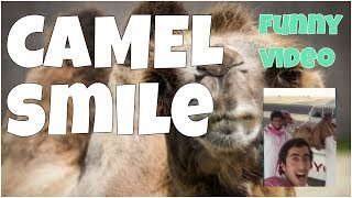 Camel smile funny video by 7 seconds of happiness▶ Thank you for watching this video! If you like it, please, put likes 👍, comments & subscribe to my channel for updates: https://www.youtube.com/channel/UCxSIy_SyK0L8NVVZevNkKew/about?sub_confirmation=1▶ New Best Short Funny Videos all the time: https://www.youtube.com/watch?v=MRtISYYK5uo&index=25&list=PLWUagoeqmhs7r_2QGP9kgn6ZsuFP-mcINWelcome to ★ 7 seconds of happiness ★ best short funny videos channel!!!FOLLOW ME:▶ Google+:  https://plus.google.com/u/1/+Jo7secondsofhappiness▶ Twitter: https://twitter.com/djidjio369▶ Facebook: https://www.facebook.com/7seconds.of.happinessIf you see a clip that you own that you did not submit or give consent for use, we have likely received false permissions and would be happy to resolve this for you! ☆•*•.¸¸. HAPPINESS ☆•*•.¸¸☆•*´¨`*☆•.¸¸.╔╗┼║║┼┼╔══╦═╗╔═╦══╗║║┼╔╣╔╗╠╗║║╔╣║═╣║╚═╝║╚╝║║╚╝║║║═╣╚═══╩══╝╚══╝╚══╝☆ ☜♡☞ Love is everything ☆•*•.¸¸☆•*´¨`*☆•.¸¸.----#7secondsFunnyVideos, #7SecondsOfHappiness, #7secondsVideos, #7secondVideo, #FunnyVideo