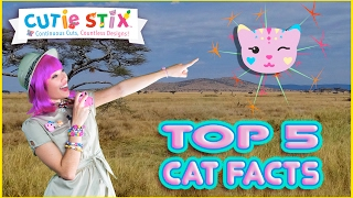 """Learn the top 5 facts about cats and where they come from in this Cutie Stix episode with Trixie!TOP 5 AMAZING Cat Facts  Official Cutie StixFrom the makers of Orbeez and Pom Pom WowThe official YouTube channel of Cutie Stix""""Continuous Cuts, Countless Creations! Seriously Cute!""""1) Cut the stix to create beads. Use the CORING UNIT to core the beads.2) Create necklaces, bracelets, and more by using the threader.3) Show off your finished jewelry design. Be your own designer!From the makers of Orbeez and Pom Pom Wow by Maya ToysSUBSCRIBE:https://www.youtube.com/channel/UCHx4Hfo0-MpUEPRTflJjWLw?sub_confirmation=1Maya Toys 2016http://www.CutieStix.com"""