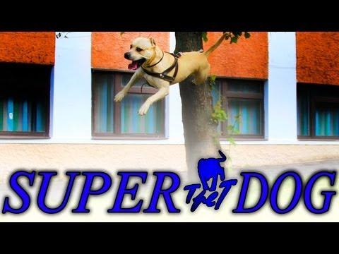 tret il super cane!