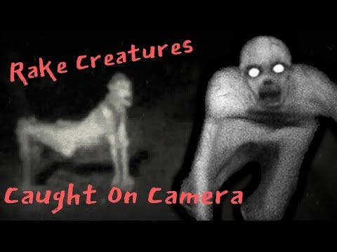 Rake Creatures Caught On Camera