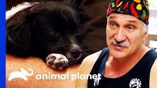 Dr. Jeff Helps Homeless Man Care For His Dog's Broken Paw | Dr. Jeff: Rocky Mountain Vet by Animal Planet