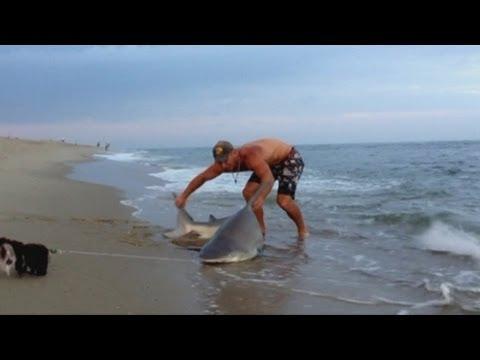 Echó la caña al mar… y pescó un tiburón de 90 kilos
