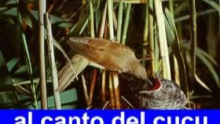 Cucu, Italienisches Einfaches Kinderlied Vom Frühling Karaoke Mit Texteinblendung Ohne Leadvoice