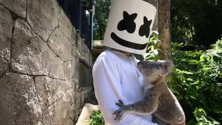 Marshmello gets attacked by a Koala in Australia Video