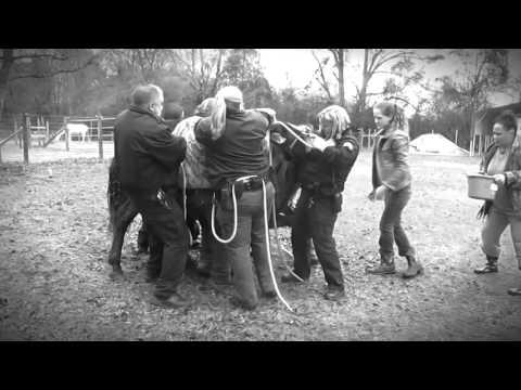 Panhandle Equine Rescue Feature