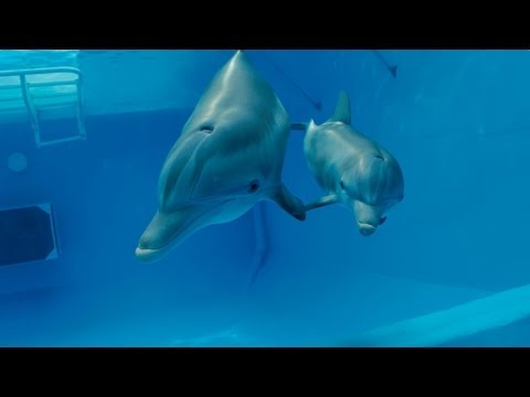 Dolphin Tale 2 (Trailer)