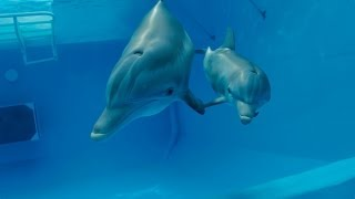 Dolphin Tale 2 - Official Teaser Trailer [HD]