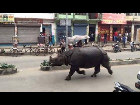 हेटौडाको मुख्य बजारमा गैडाद्वारा सर्वसाधारणमाथि आक्रमण !!