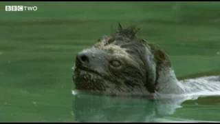 Плавучий ленивец