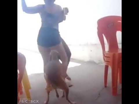 Em thích nhảy lắm cơ =)) Chó ngành rồi :))