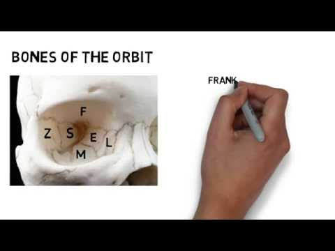 Learning the Bones of the Orbit