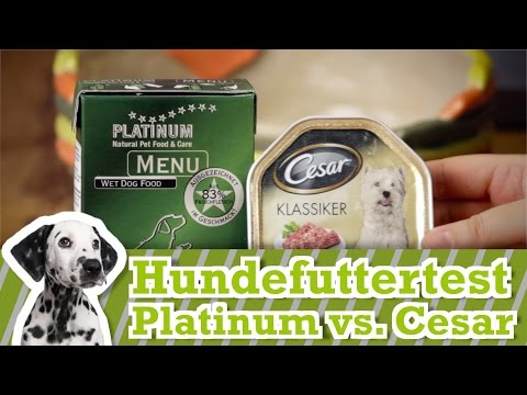 Hundefutter Test: Cesar vs Platinum Menu