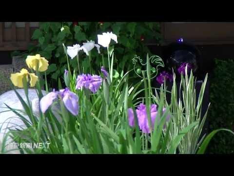 寺の象徴ソテツと花々 極楽寺
