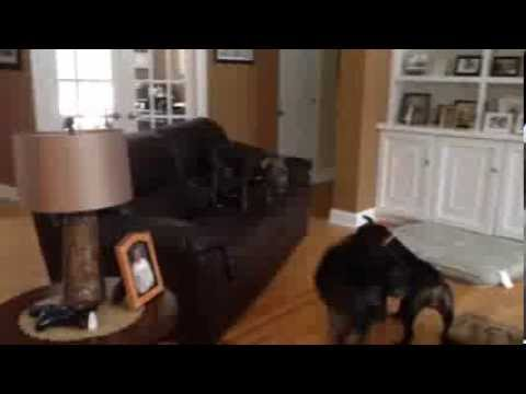 No dog in the history of dogs has had more fun than THIS dog...jumping on the couch