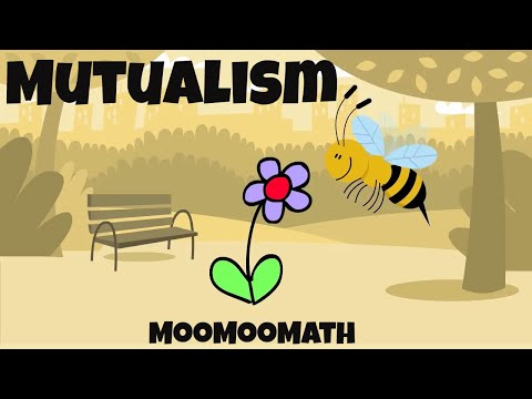 10 Mutualism Examples