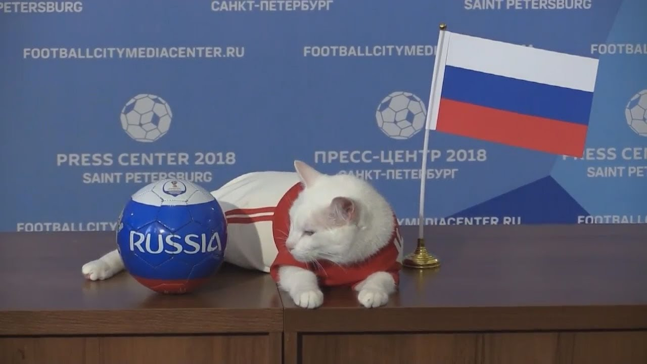 Αχιλλέας: Ο μάντης γάτος του Μουντιάλ