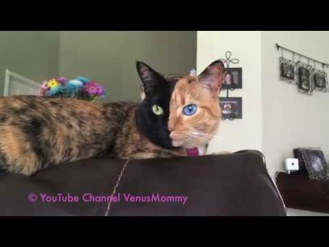 Venus The Not Photoshopped Cat....here's More Cute Proof ;)