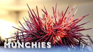 Video Sea Urchins Are California Gold: Hunter Gatherer MP3, 3GP, MP4, WEBM, AVI, FLV Agustus 2019