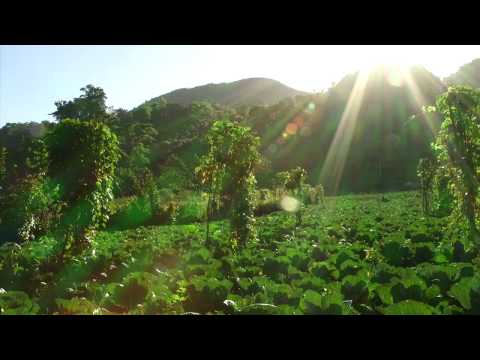 Agricultural Co-op in Haiti