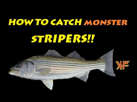 Surf Fishing:How to Catch MONSTER Stripers – Long Island, MA
