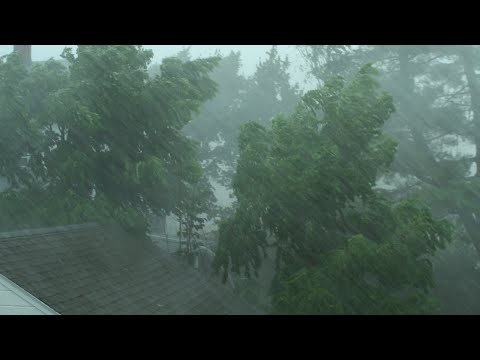 Heavy Rain and Wind Sounds For Sleeping / Relaxation - 10 Hours