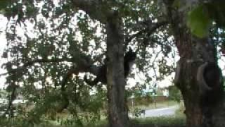 Video Arni the tree cat MP3, 3GP, MP4, WEBM, AVI, FLV Desember 2017