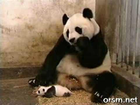 「パンダがヒィィィとガチビックリでござる」のイメージ