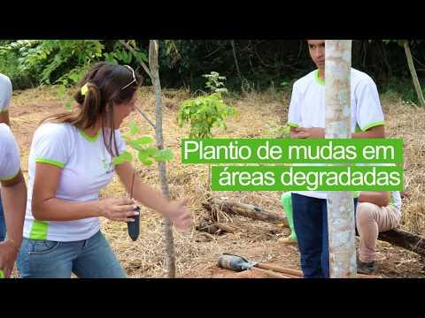 Plantio de mudas em áreas degradadas