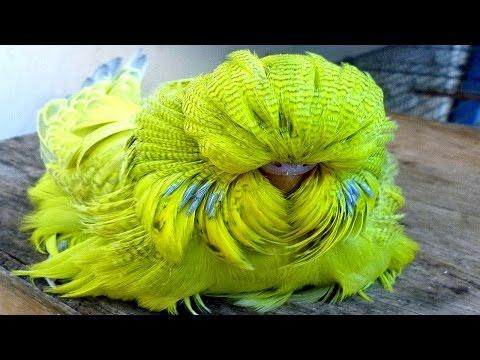7 specie di pappagalli esotici unici al mondo