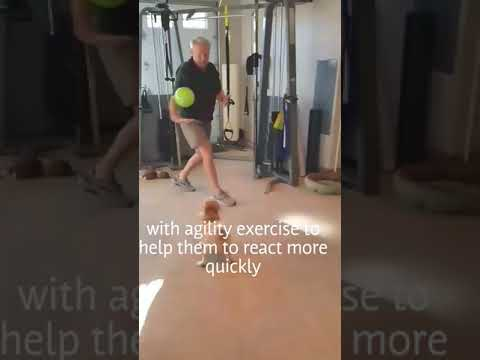 Agility For Seniors