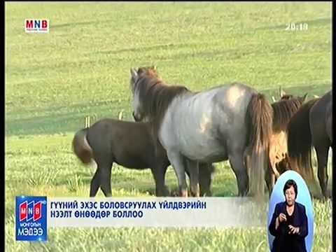 Монголд гүүний эхэсээр гоо сайханы бүтээгдэхүүн үйлдвэрлэнэ