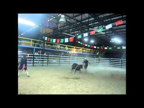 video de practicas de monta de toros y payasos de rodeo