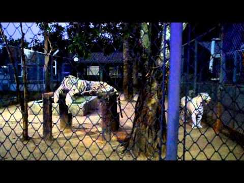 Chiang Mai Night Safari (freeliving.ru)