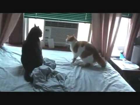 快打旋風之貓咪版,果然也是很刺激!!