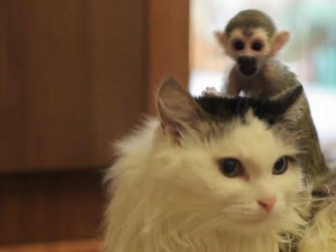 Ruska mačka usvojila mladunče majmuna u zoo vrtu u Sibiru