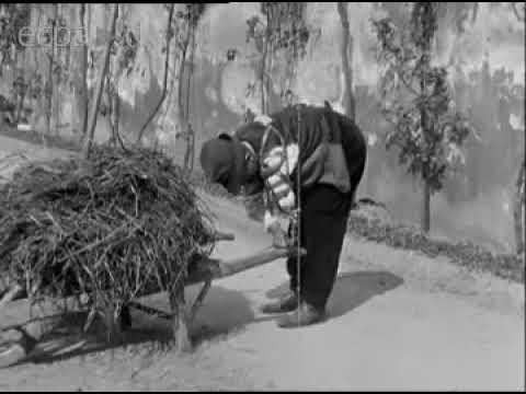 Film d'archives 14-18 / Les lendemains de la guerre et le défilé de la victoire