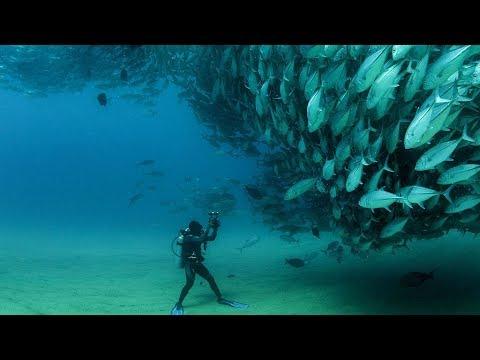 Best Diving Sites in Egypt, Red Sea, Indian Ocean. GoPro 4 Scuba Diving, Underwater_Merülő helyek. Legeslegjobbak