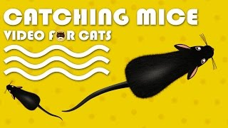 CAT GAMES - Catching Mice! Entertainment Video for Cats to Watch. full download video download mp3 download music download