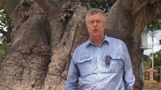 Mannar Sri Lanka  city photos gallery : Famous Biobab Tree, Mannar, Sri Lanka - Huge & Ancient!!