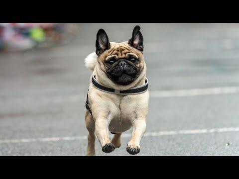Wettlauf für Hund und Herrchen in Manila