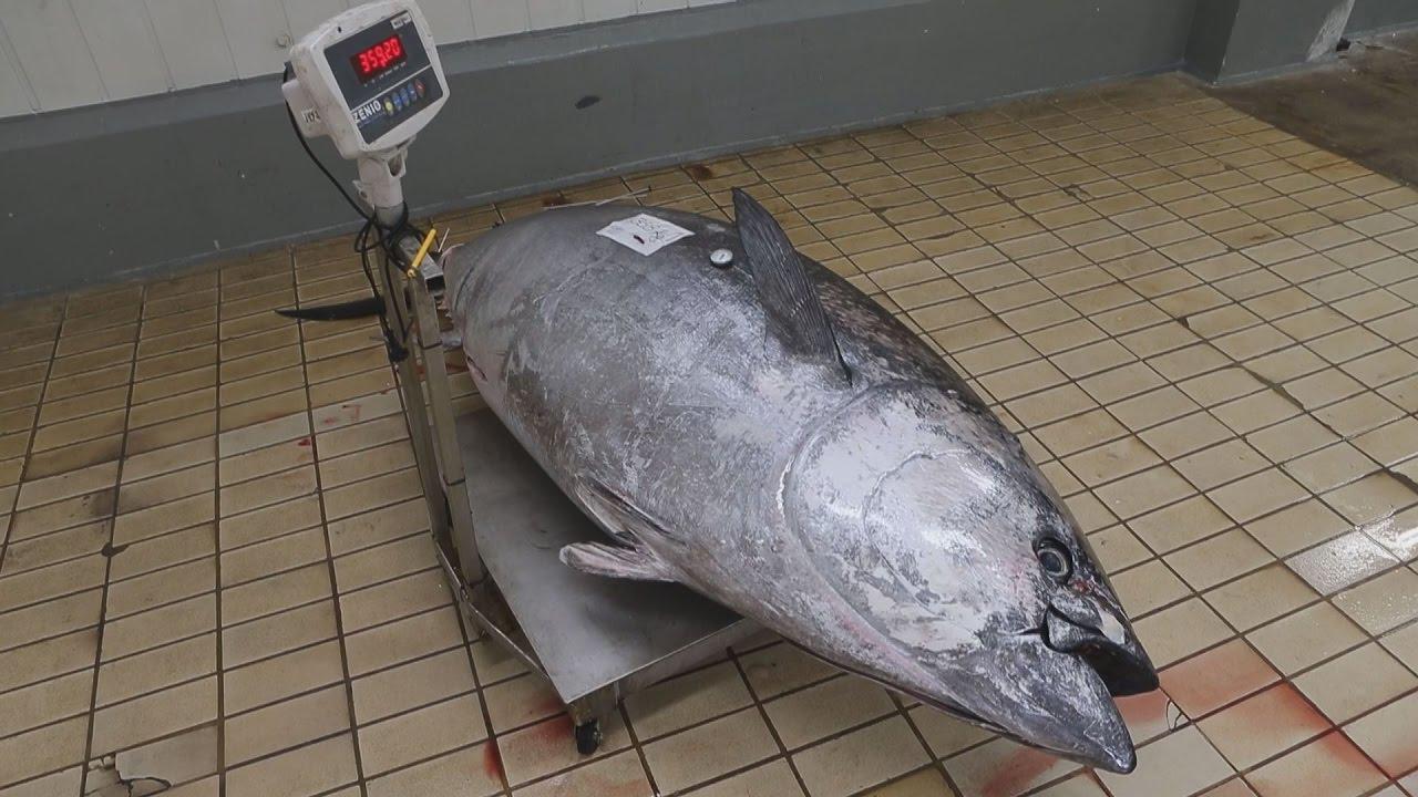 Tόνος 358 κιλών και μήκους 2,80 μέτρων