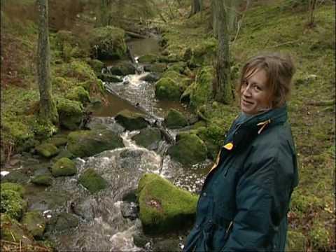 Kraftsamling skog - Karin en skogsägare