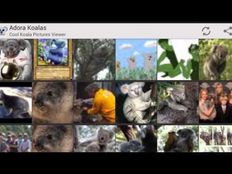 Video of Adora Koalas - Koala Pictures