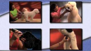 Wahl Pet Grooming Tips And Techniques