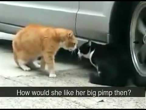 catfighting - Also Check out the most ugliest dog know to man video http://www.youtube.com/watch?v=YY-4hRjUvfA http://www.thelazybusinessowner.com/the-most-ugliest-dogs-kn...